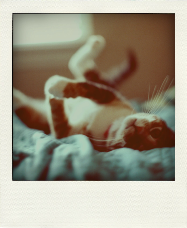 Poladroid-6