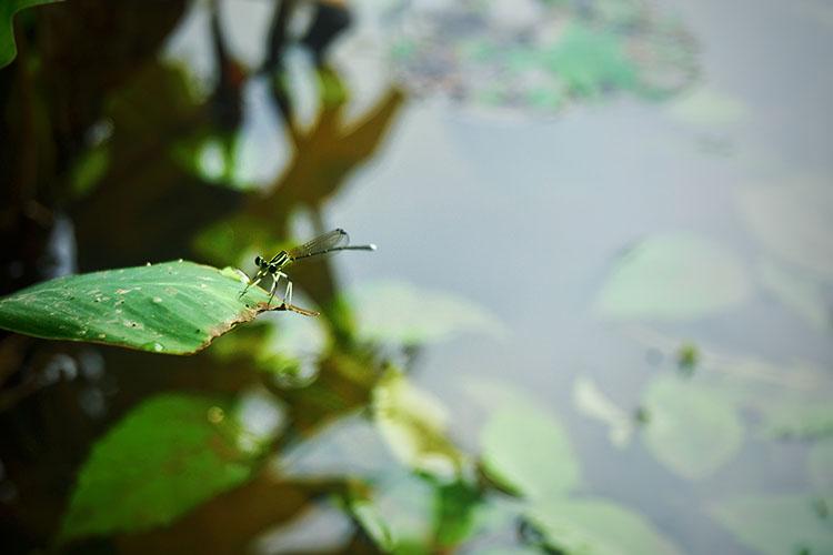 情人谷-蜻蜓2