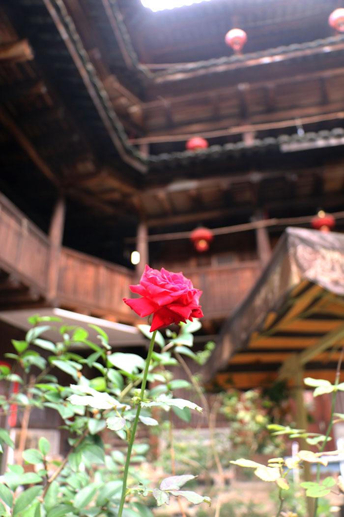 土楼-玫瑰